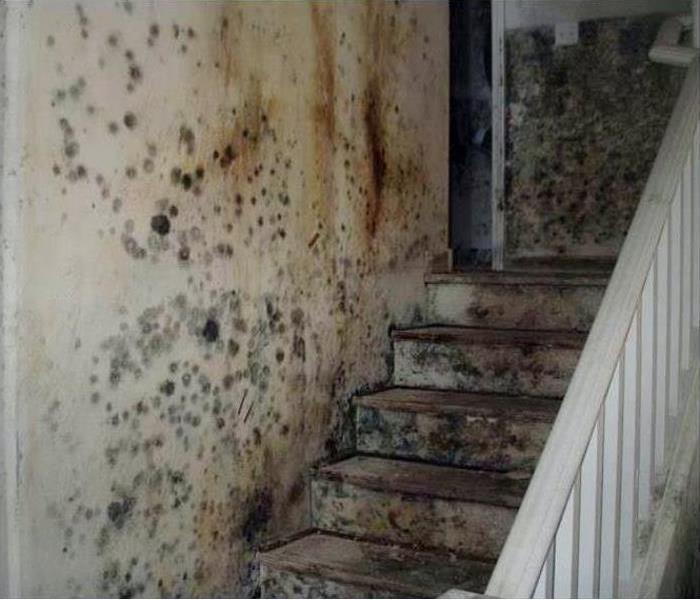 Mold Remediation And Restoration In South Daytona