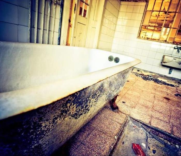 Mold Remediation What You Should Do When You Find Mold Growing Around Your Bathtub Piping