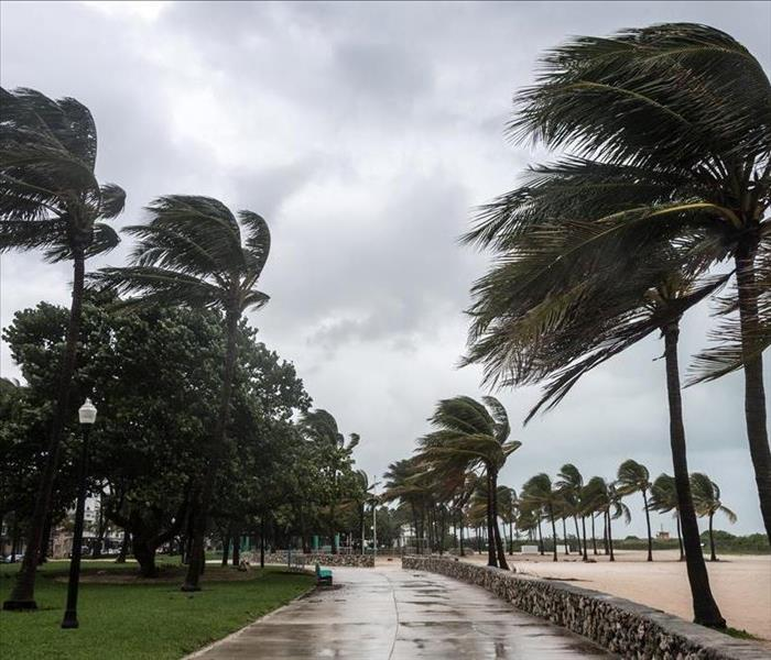 Storm-blown palm trees along the beach front