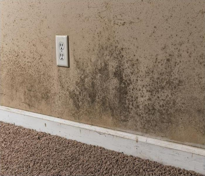 Mold Remediation What You Can Do When You Find Mold Damage On Your Daytona Beach Property