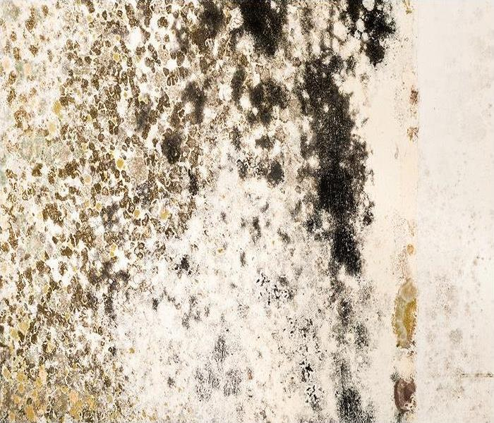 Mold Remediation Negative Pressure Contains Mold Damage During Remediation In Ponce Inlet Properties